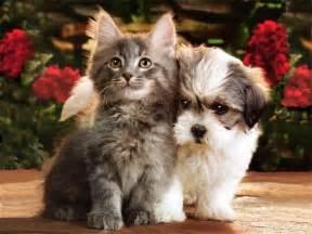 friends of cats best friends 1024x768