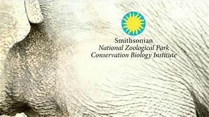 Smithsonian National Zoo Conservation Biology Institute TV ...