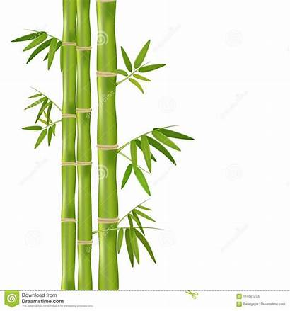 Bamboo Plant Background Vector Realistic Illustration Isolated