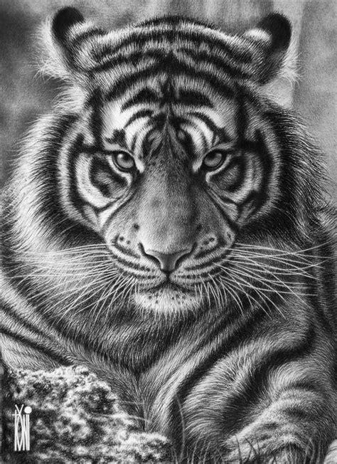 pencil | Tiger tattoo design, Tiger tattoo, Animal tattoos