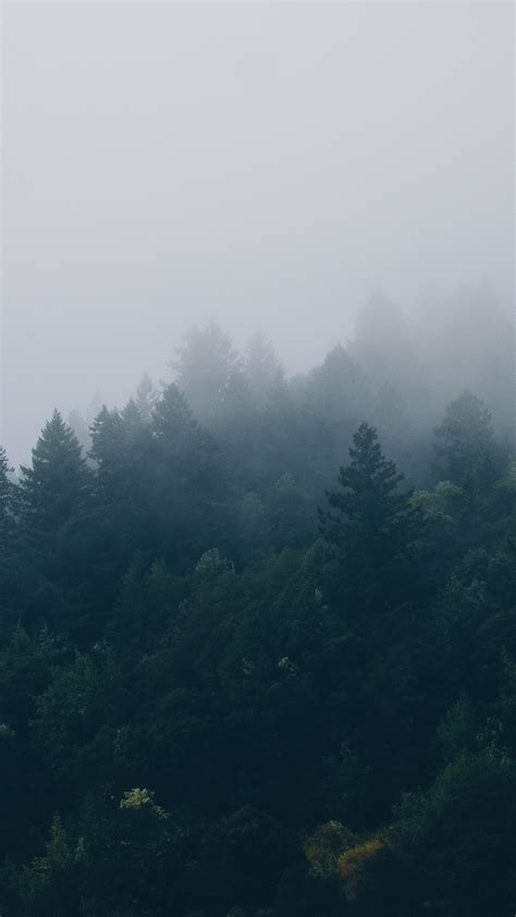 Background Images For Iphone by Forest Iphone Wallpaper Gallery