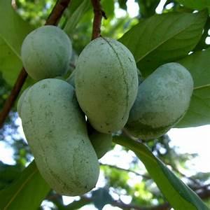 Arbre A Fruit : liste de fruits jaunes ooreka ~ Melissatoandfro.com Idées de Décoration