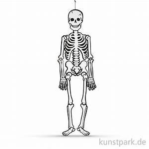 Karton 120 X 60 X 60 : skelett aus wei em karton 120 cm 300g ~ Orissabook.com Haus und Dekorationen