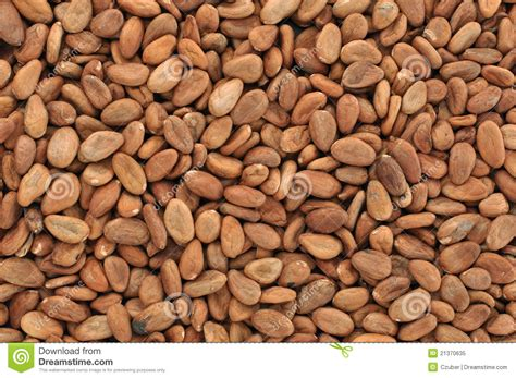 Goji beans