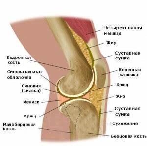 Лечение артроза коленного сустава народными средствами отзывы