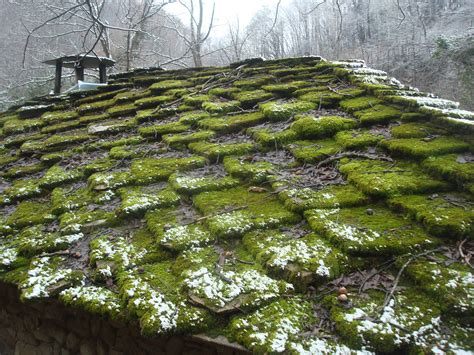 How To Prevent Moss From Growing On The Roof How Do I Add A Roof To My Deck Yakima Rack For Truck Topper Plywood Lowes Flat Steel Truss Design Ford Transit Connect Bolts Decra Roofing Supplies Red Inn 5810 Reisterstown Rd Baltimore Md 21215 Best Honda Crv 2018