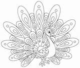 Coloring Peacocks Simple Printable Adult Children Justcolor sketch template