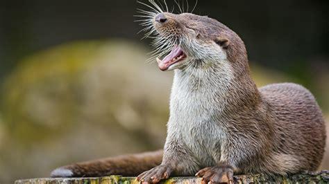 wallpaper otter cute animals funny animals