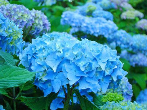 tips memilih bunga  interior rumah sesuai zodiak