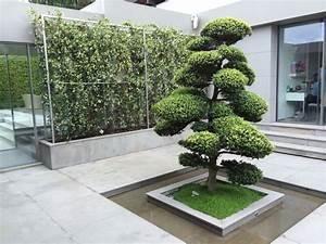 348 best niwaki images on pinterest bonsai japanese for Whirlpool garten mit red maple bonsai
