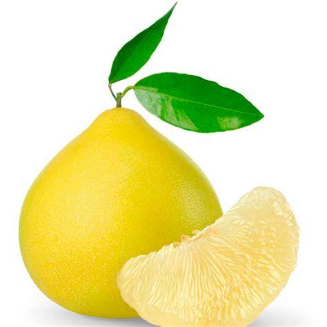 indoor citrus tree pummelo pomelo grapefruit citrus maxima my