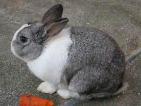 ウサギ:うさぎの年になりました