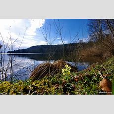 Langsam Wird Es Frühling Foto & Bild Deutschland