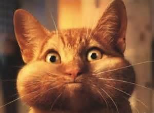 prednisone for cats prednisone cat mačka na pronizonu fight with chron