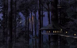 203, Forest, Hd, Wallpapers