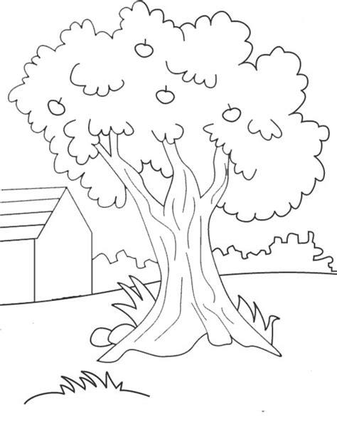 Gambar Mewarnai Pohon Terbaru Gambarcoloring
