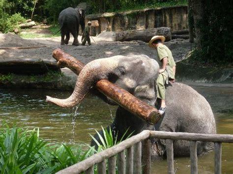 zoo working elephants singapore tripadvisor rate