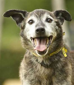 Sponsor a Dog | Woody, Heinz 57 | Dogs Trust