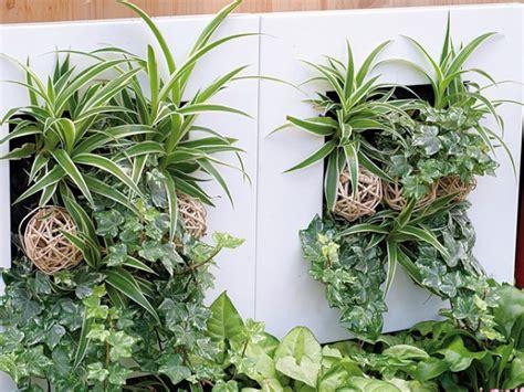 faire un cadre vegetal soi mme comment cr 233 er et entretenir un cadre v 233 g 233 tal