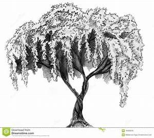 Sakura Tree - Pencil Sketch Stock Photo - Image: 18409240 ...