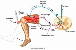 Approach To The Neurological Patient