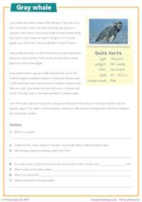 reading comprehension gray whale