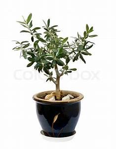 Olivenbaum Im Topf : kleine olivenbaum olea europaea in einem glas und ~ Michelbontemps.com Haus und Dekorationen