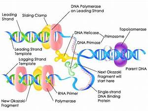 Dna  Study Guides And Study On Pinterest