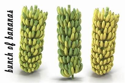 Bunch Bananas 3d Banana Obj Fbx Models