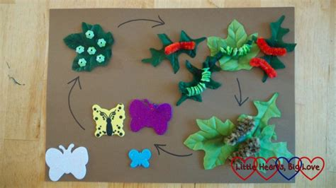 creating  butterfly life cycle picture  hearts