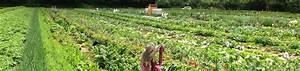 Garten Mieten Frankfurt : meine ernte miete deinen gem segarten in frankfurt ~ Orissabook.com Haus und Dekorationen