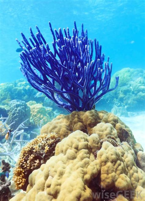 What Is Bleu by What Is Coral With Pictures