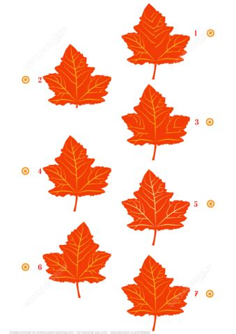 find  similar pictures  maple leaves  printable