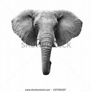 Elephants Stock Photos, Images, & Pictures | Shutterstock