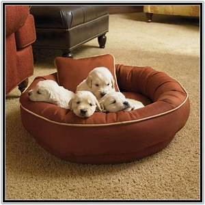 Chew proof dog bed walmart best dog beds for large dogs for Dog keeps chewing bed