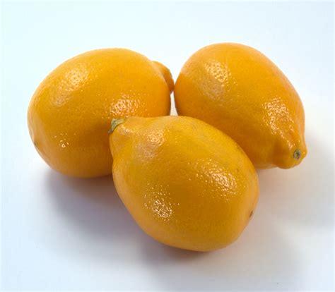meyer lemon meyer lemons www imgkid com the image kid has it
