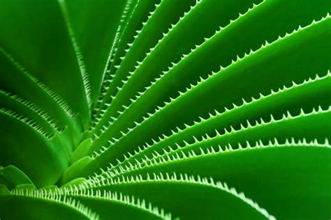 green cactus pattern  stock photo public domain pictures