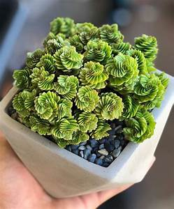 100, Gorgeous, Succulent, Plants, Ideas, For, Indoor, And, Outdoor, Full, Of, Aesthetics