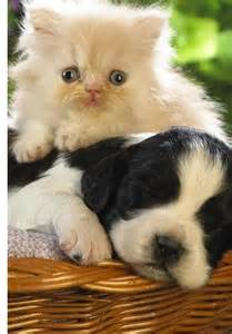 Cat and Puppy Together