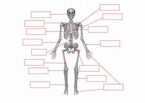 Skeleton - Bones Labelling Worksheet By Benmarshall939 - Teaching Resources