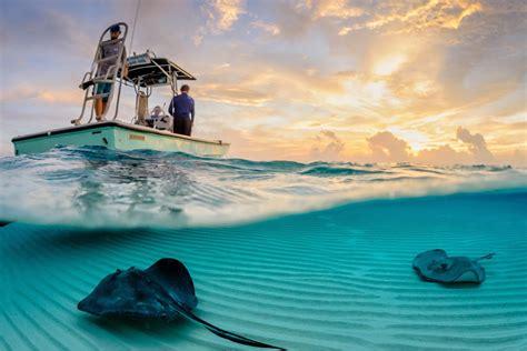 Row Row Row Your Boat Hippo by Stingrays The Boat Photo One Big Photo