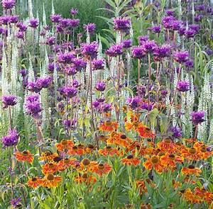 Graminées Vivaces Hautes : fleurs jardin vivaces ~ Premium-room.com Idées de Décoration