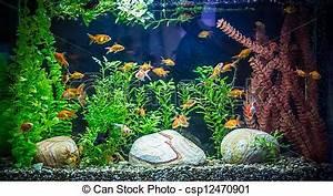 Aquarium Fische Süßwasser Liste : stock fotografie von fische s wasser ttropical aquarium a gr n sch ne csp12470901 ~ Watch28wear.com Haus und Dekorationen