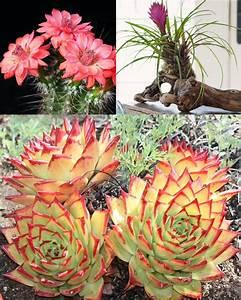 Cultiva suculentas o crasas como un jardinero profesional ECOagricultor