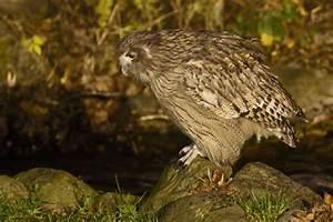Stephen Burch's Birding Website -Japan Trip report ...