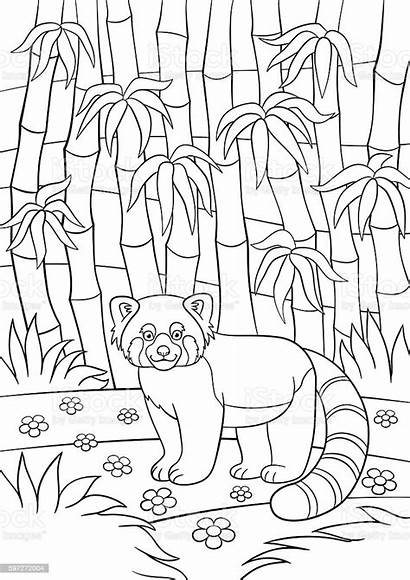 Panda Coloring Pages Forest Animal Illustration China