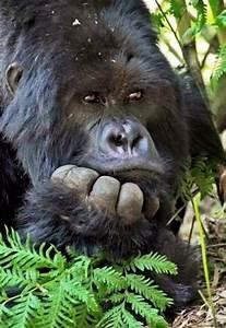 15+ best ideas about Baboon on Pinterest   Primates ...