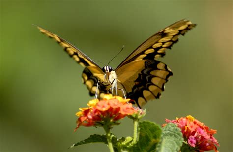 Animated Fly Wallpaper - abstract wallpaper butterfly wallpaper