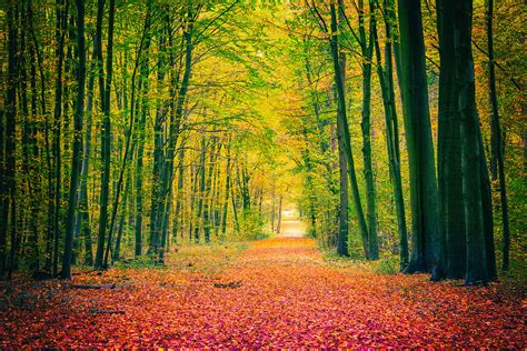 wide forest trail wallpaper wall decor