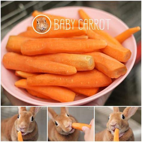 เบบี้แครอท กับกระต่ายตัวน้อย   บันทึกเจ้าหูยาว